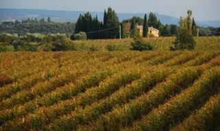 Mti Volsini-Vigneto presso Civitella d'Agliano 2 MINLB