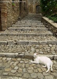 Casperia-Scalinata con gatta