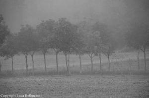 Campagna con nebbia
