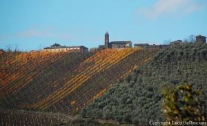 Sermugnano-Scorcio fra le vigne RCRLB