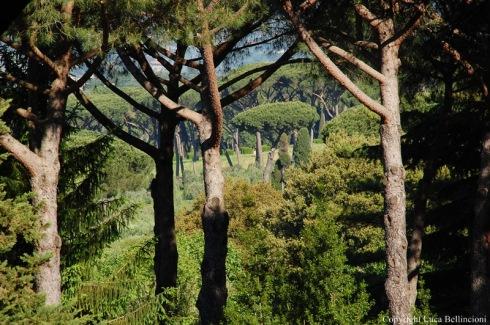 Albano-Pini nei pressi dei Cappuccini 2 RCRLB