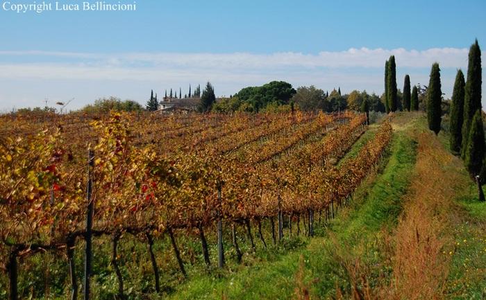 Castiglione in Teverina-Vigneto verso Sermugnano 1 RCRLB